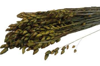 DRŻĄCZKA KOLOR ZIELONY (oliwkowy) suszona trawa ozdobna