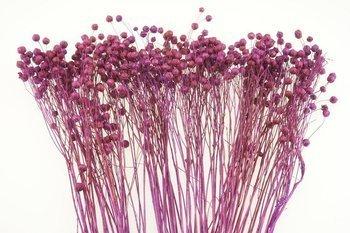 LEN KOLOR CIEMNOWRZOSOWY suszony barwiony dodatek florystyczny pęczek 45-50 cm