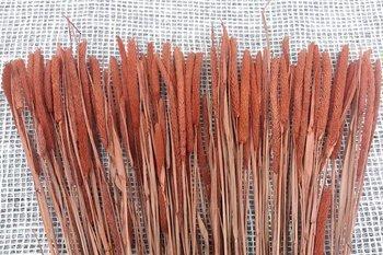 TYMOTKA ŁĄKOWA KOLOR BRUDNOPOMARAŃCZOWY Phleum pratense (brzanka pastewna) ozdobna trawa suszona