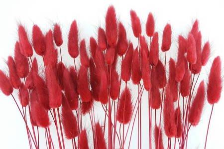 DMUSZEK JAJOWATY KOLOR CZERWONY (Lagurus ovatus) ozdobna trawa suszona