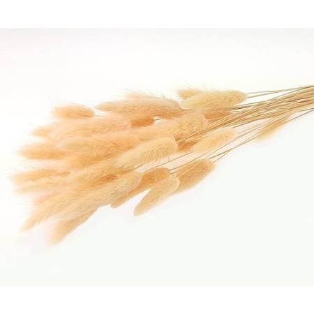 DMUSZEK JAJOWATY KOLOR JASNOMORELOWY ~35 szt. (Lagurus ovatus) ozdobna trawa suszona barwiona