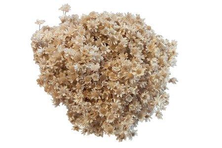 GLIXIA KOLOR NATURALNY gliksja niebarwiona suszki dekoracyjne