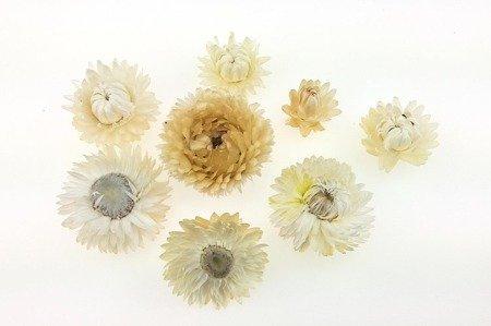 KOCANKA SUSZONA MIX KREMOWY (suchołuska, nieśmiertelnik) kwiaty suszone suszki dekoracyjne