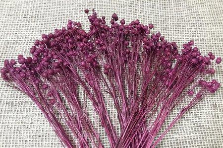 LEN KOLOR BURACZKOWY suszony barwiony dodatek florystyczny pęczek 45-50 cm