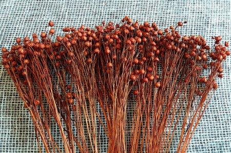 LEN KOLOR CIEMNOPOMARAŃCZOWY suszony barwiony dodatek florystyczny susz krajowy