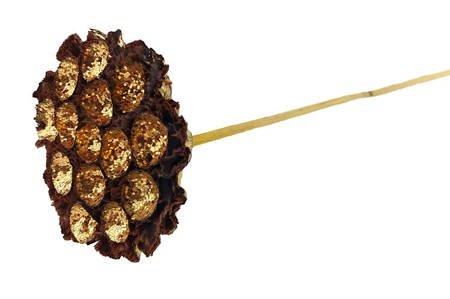 LOTOS ZŁOTY Z BROKATEM susz egzotyczny na patyku złote dodatki