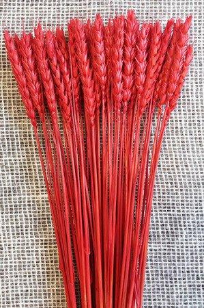 PSZENICA KOLOR CZERWONY zboże suszone barwione pęczek 50 cm