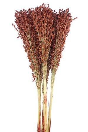 SORGO KOLOR NATURALNY BRĄZOWY 5 szt. niebarwiony susz roślinny do dekoracji rośliny na suche bukiety