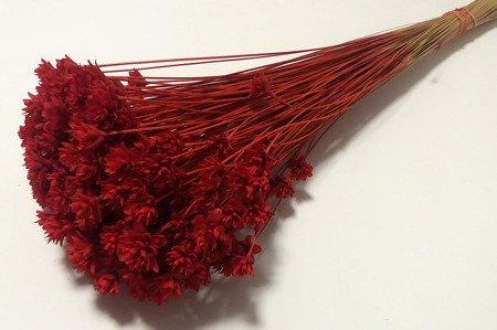 Susz egzotyczny drobne kwiatki kolor czerwony