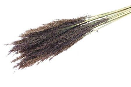 TRZCINA KOLOR NATURALNY trawa suszona na suche bukiety i wieńce