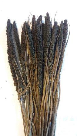 WŁOŚNICA KOLOR BRUNATNOCZARNY (setaria) trawa ozdobna na suche bukiety